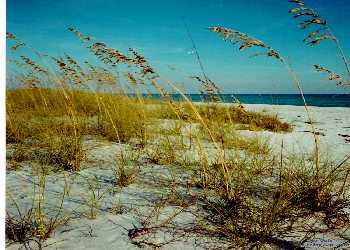 It's more than a name - The Sea Oats are beautiful!